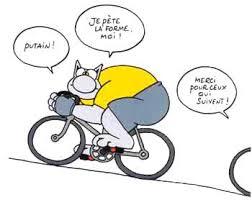 vélo chat